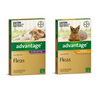 Bayer Advantage Cat Flea Treatment | Peticular