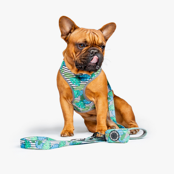 Wildling Pet Co. Aloha Dog Leash | Peticular