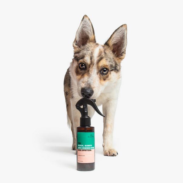 The 3-in-1 Dog Spritzer