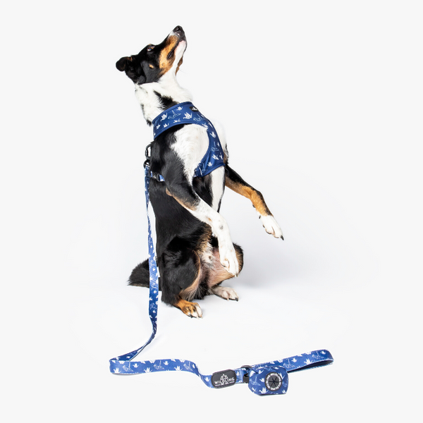 Wildling Pet Co. Tokyo Dog Leash | Peticular
