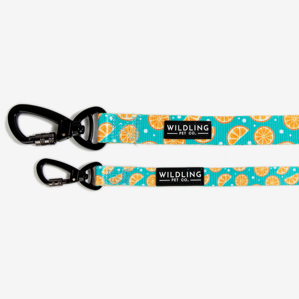 Zest Dog Leash