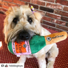 Plush Dog Toy | Woof Clicquot Rosé