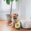 NomNomz Plush Dog Toy | Avocado