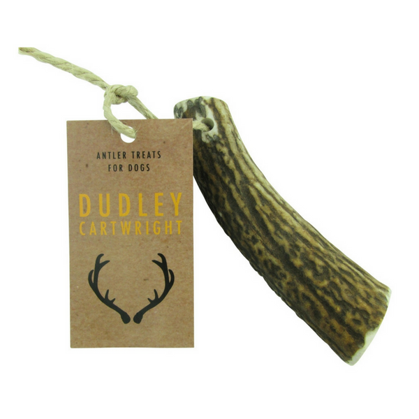 Dudley Cartwright Deer Antler | Whole | Peticular