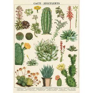 Cavallini Poster Wrap - Cacti and Succulents