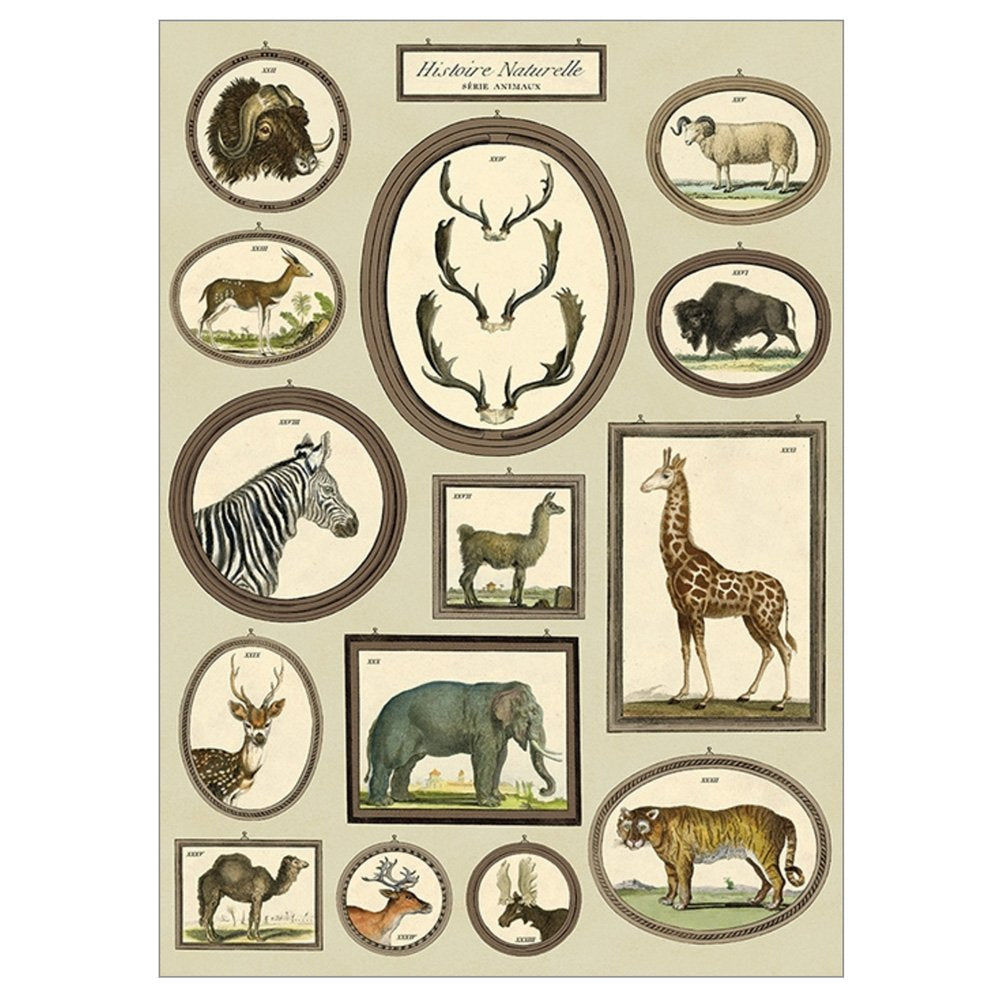 Cavallini Poster Wrap - Natural History Animals