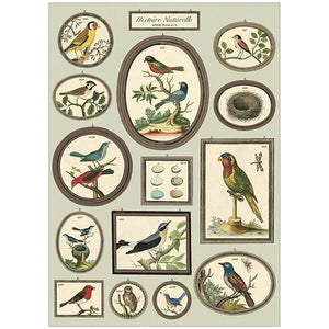 Cavallini Poster Wrap - Natural History Birds