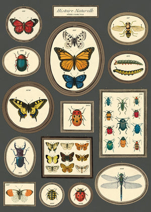 Cavallini Poster Wrap - Natural History Butterflies & Insects