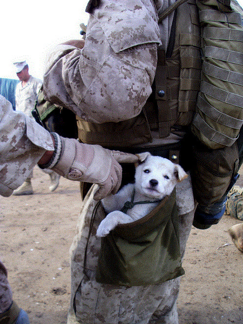 Good Soldier Army Adorable Dog - dogandsoldier  Perfect Image Reference_294610  .jpg?250