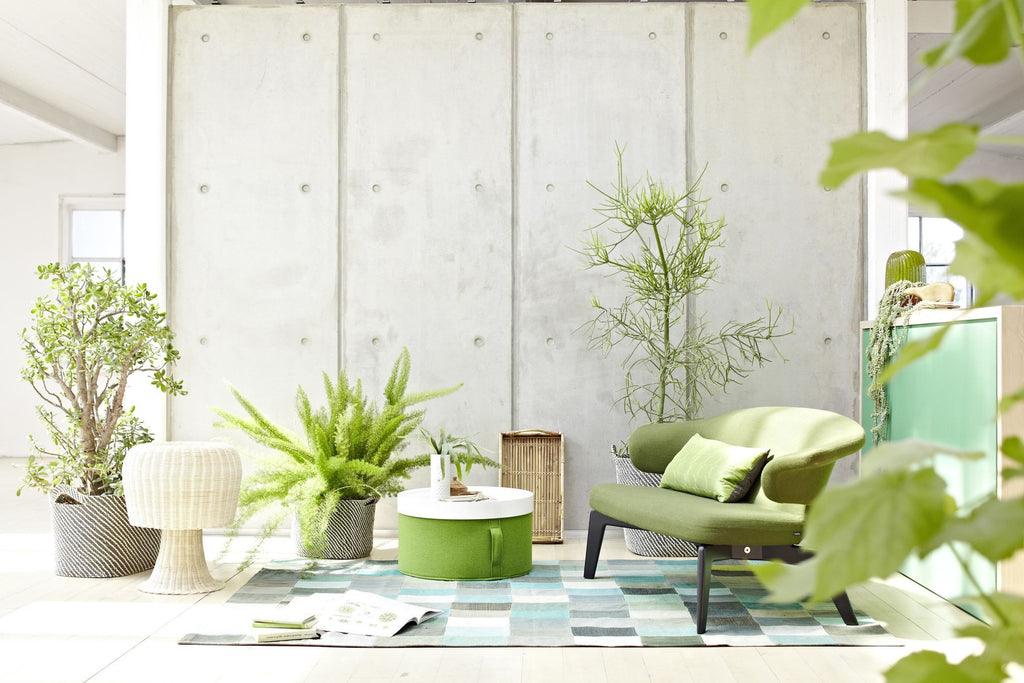 Lush Green House Plants Bring The Outdoors In