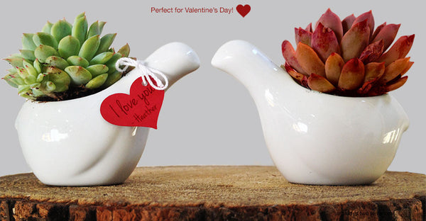 Valentines Day Love Birds of a Feather Terrarium Terrariums- USA Made. Custom. Exclusive. Quality Hammers and Heels