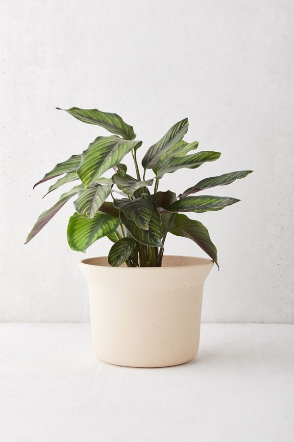 Mae Small Ceramic Planter