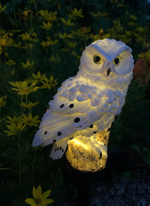 Solar Powered Owl