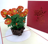 Colorful Pop-Up Cards