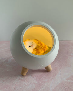 Little Pet House Atmosphere light