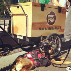 Smart Cookie Cart treat trike food truck for dogs