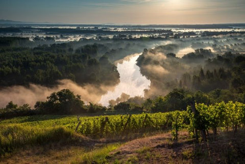 Wines of Croatia & Hungary