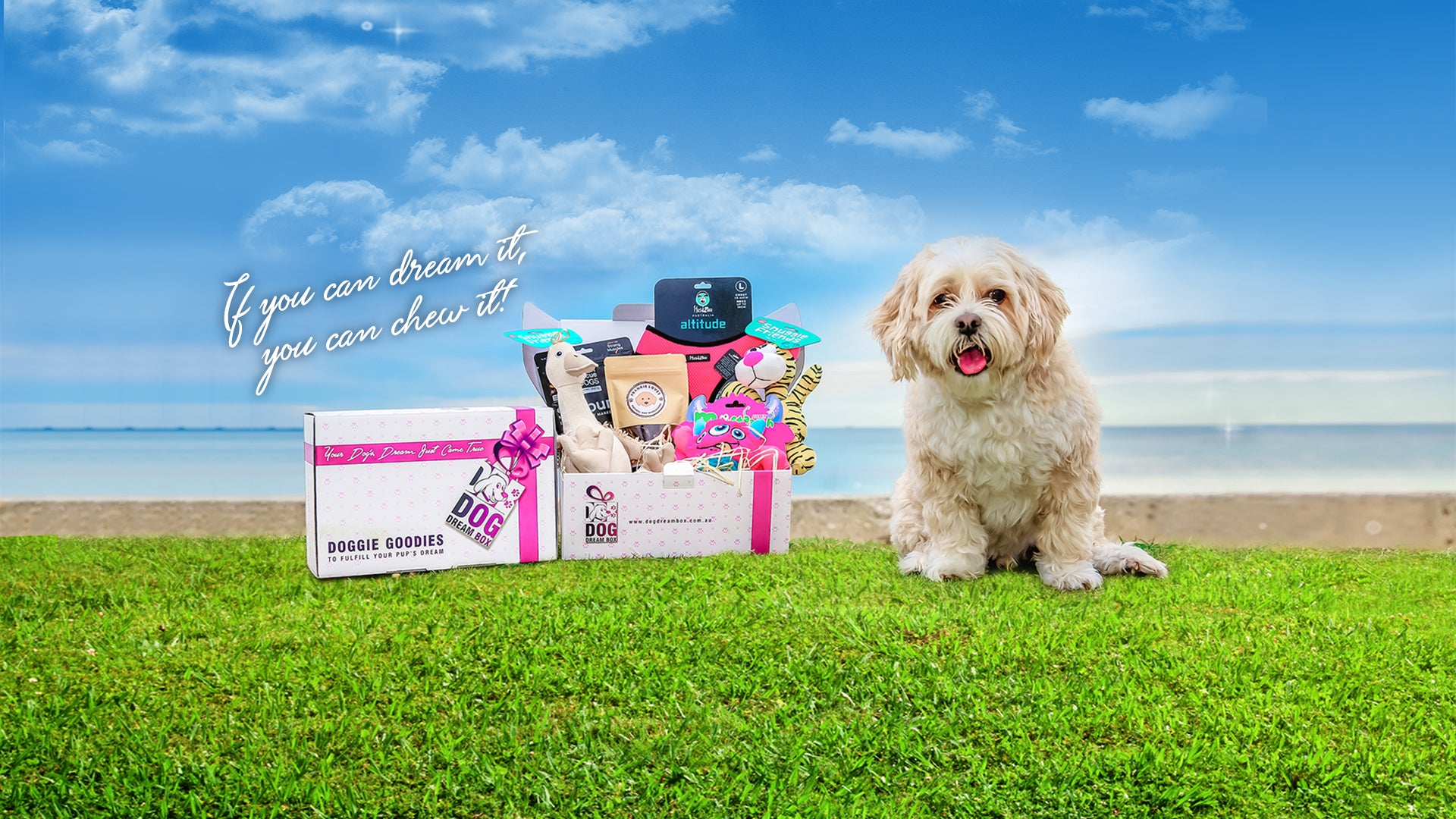 Dog Subscription Box Australia