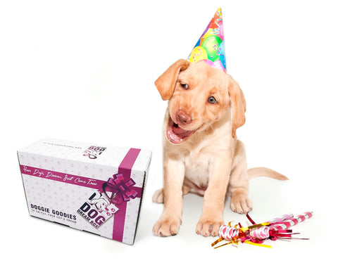 Dog Birthday gift box