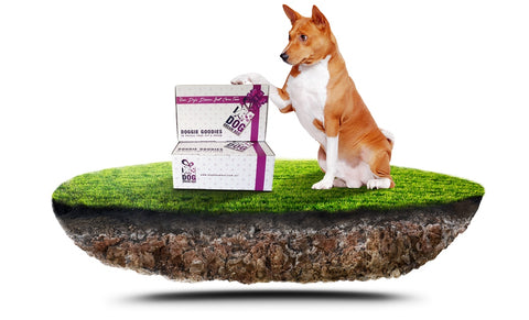 Limited Edition - Natural Paws Gift Box | Dog Toys, Treats & Accessories