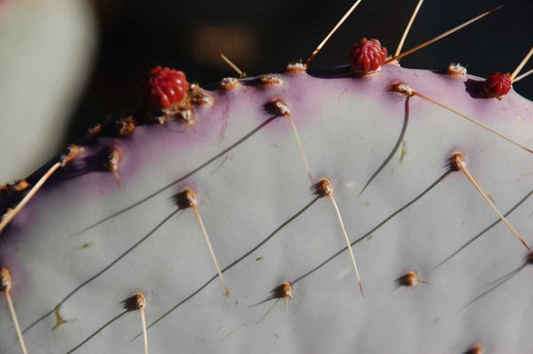 Cactus Spines Photography Print