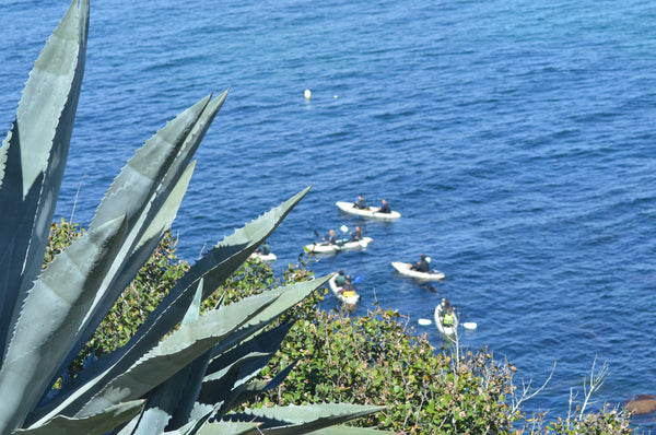 La Jolla Cove Photography Print | Limited Edition