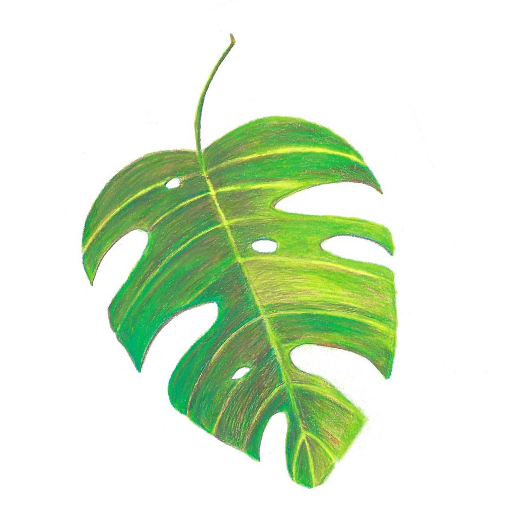 Philodendron leaf art