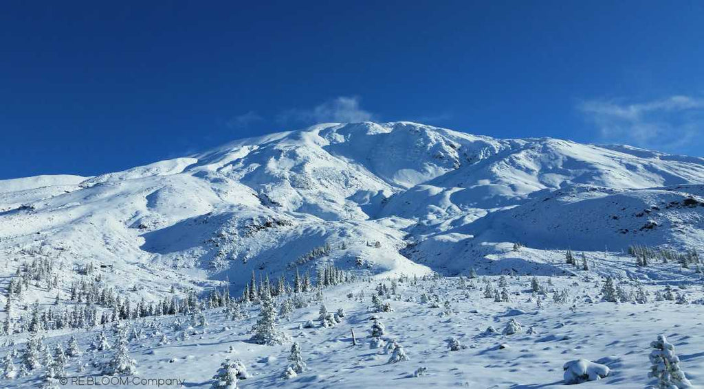 Mount St. Helens | LE