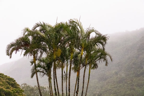 Tropical Rain Shower Photography Print | Limited Edition