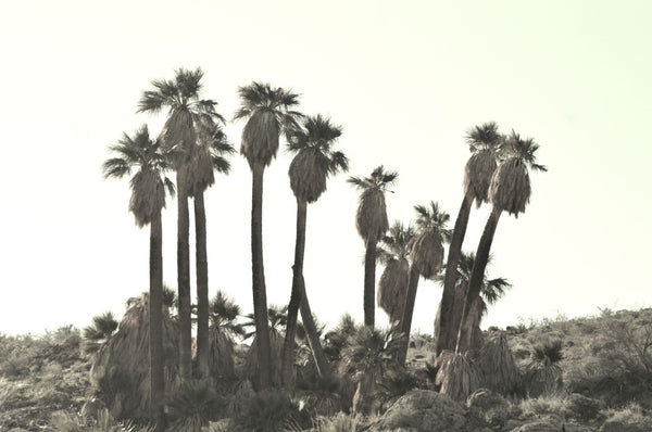 Palm Trees Photography Print