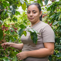 Honduras Amprocal Women's Cooperative Fairtrade Organic