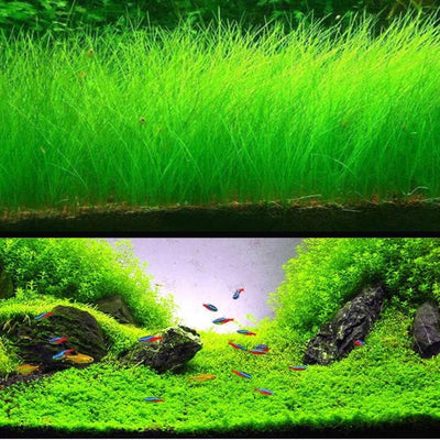 Aquarium Water Grass Mini Leaf Live Plant Fish Tank Decoration