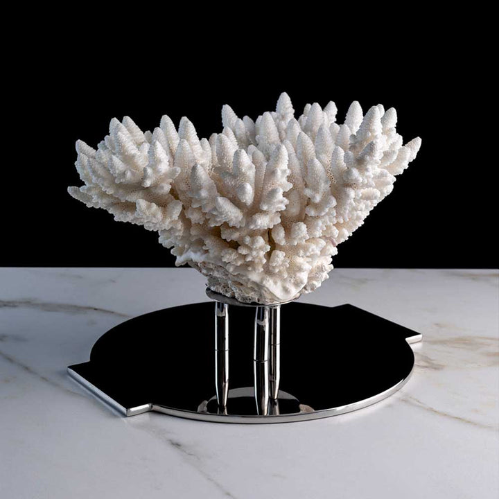 Ame De Corail, Finger coral on a stainless steel frame by Maritime Objects - Fp Art Online