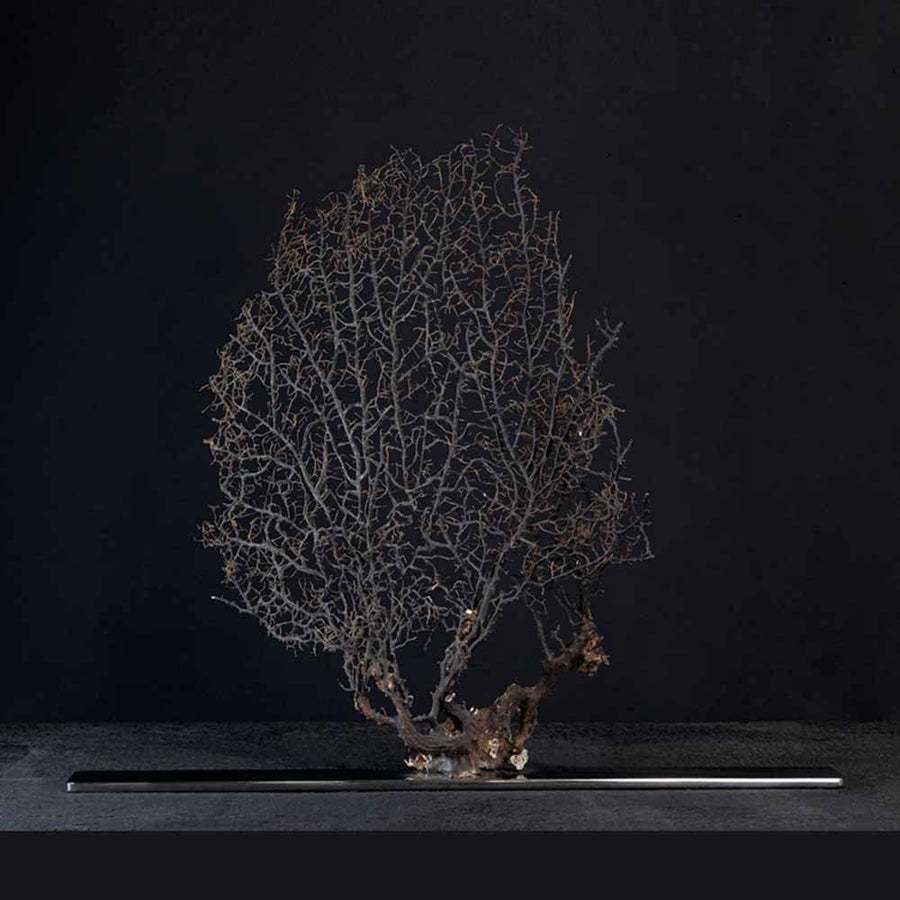Arabesque, Black Gorgonia on a stainless steel frame by Maritime Objects - Fp Art Online