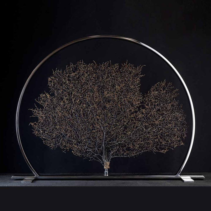 Arbre De La Vie, Black Gorgonia on a stainless steel frame by Maritime Objects - Fp Art Online
