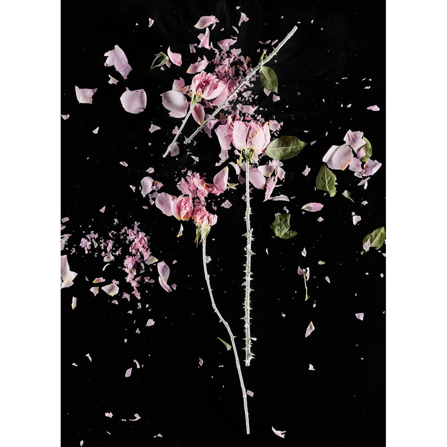 CrioFlowers, Roserosa, Fineart photo luster 260g paper by Bozzano Daniele - Fp Art Online