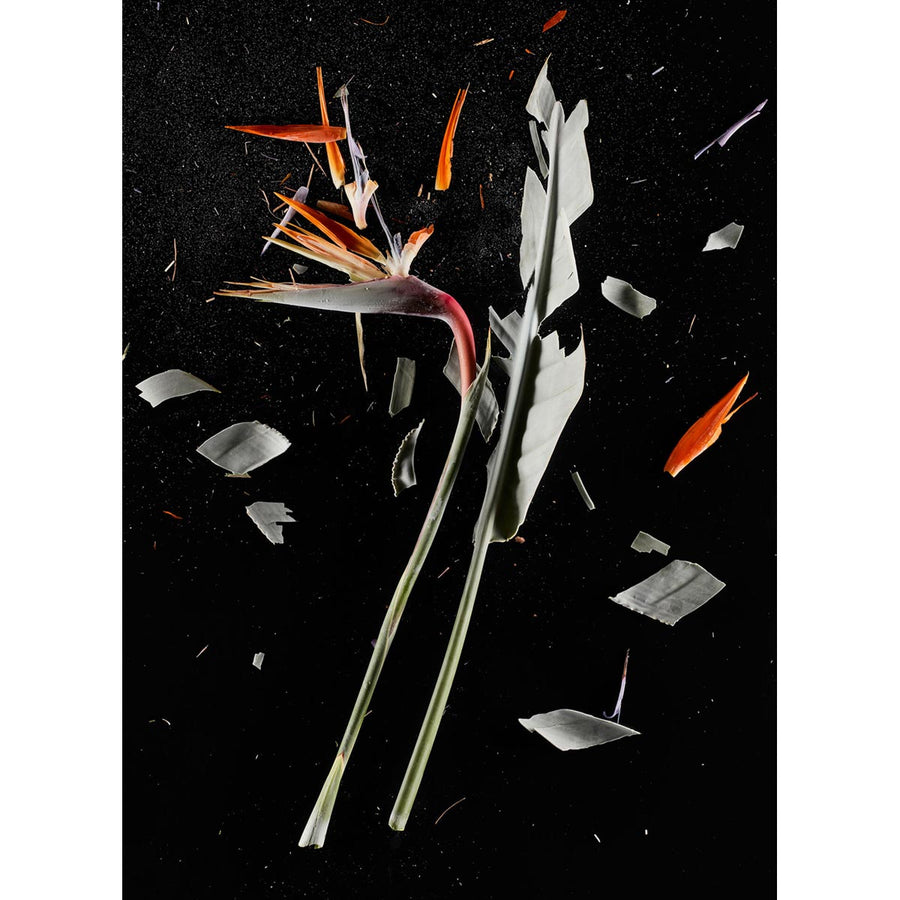 CrioFlowers, Strelitzia, Fineart photo luster 260g paper by Bozzano Daniele - Fp Art Online