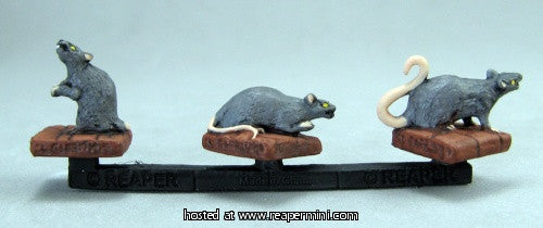 Giant Rats Miniature