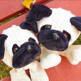 pug dog stuff your own teddy bear by Teddy Bear Loft