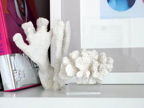 Small Faux Coral On Perspex Stand