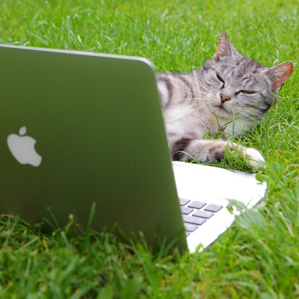 A-cat-looks-suspiciously-at-a-MacBook-Air-laying-in-the-grass