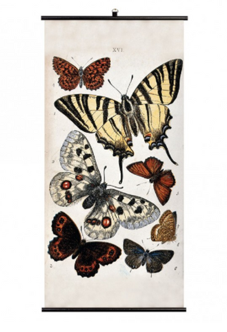 Cubic Biologica Butterflies Wall Chart