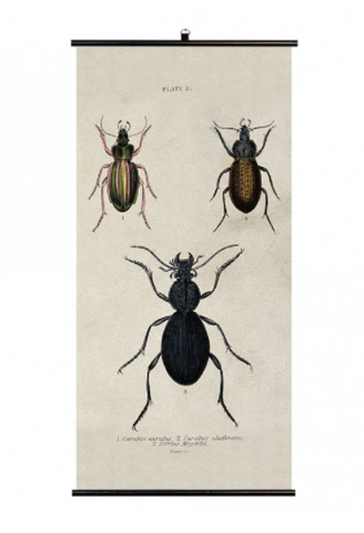 Cubic Biologica Insects Wall Chart