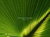 Amazing Palm Sunday PowerPoint, Palm Sunday church slide, Palm Sunday Christian background with lots of copy space!