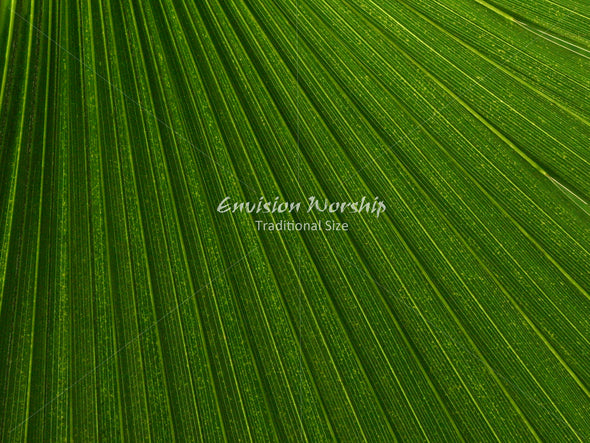 Palm Sunday Christian background with lots of room for lyrics and Bible verses.