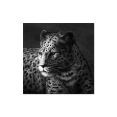 J&M Premium Acrylic Wall Art - Cheetah