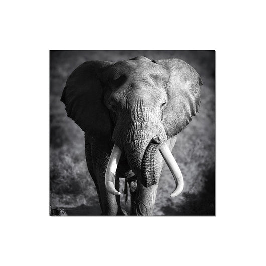 J&M Premium Acrylic Wall Art - Elephant Power