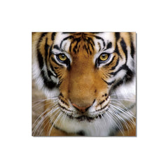 J&M Premium Acrylic Wall Art - Tiger