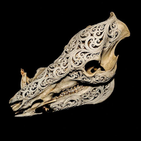 Hand Carved Boar Skull With Ornate Design