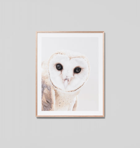 Curious Owl Framed Print